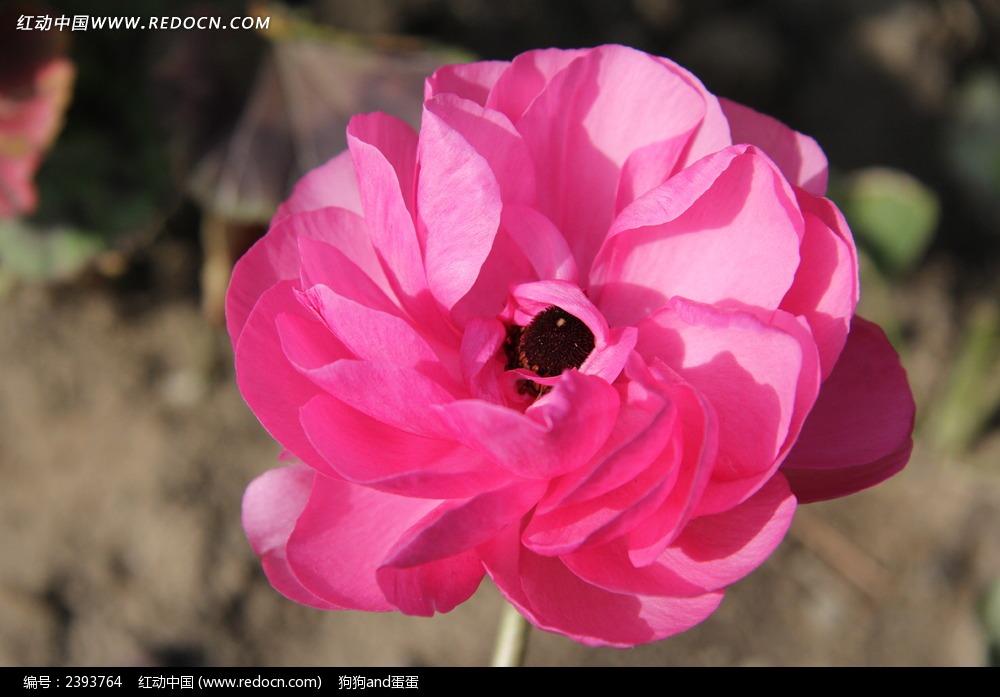 免费素材 图片素材 生物世界 花草树木 美丽的花朵