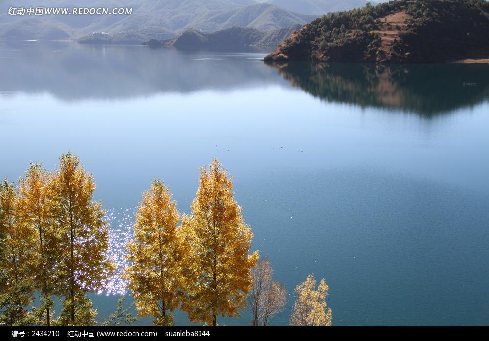 湖边的杨树图片_自然风景图片