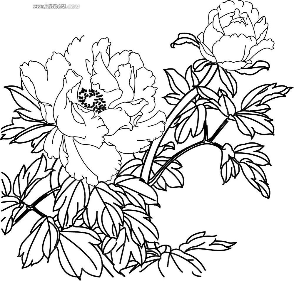 矢量白描牡丹花卉