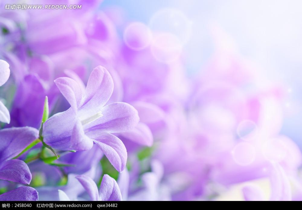 盛开的紫色花朵 阳光下的紫色花朵 阴天下的紫色花朵 蓝紫色花朵的
