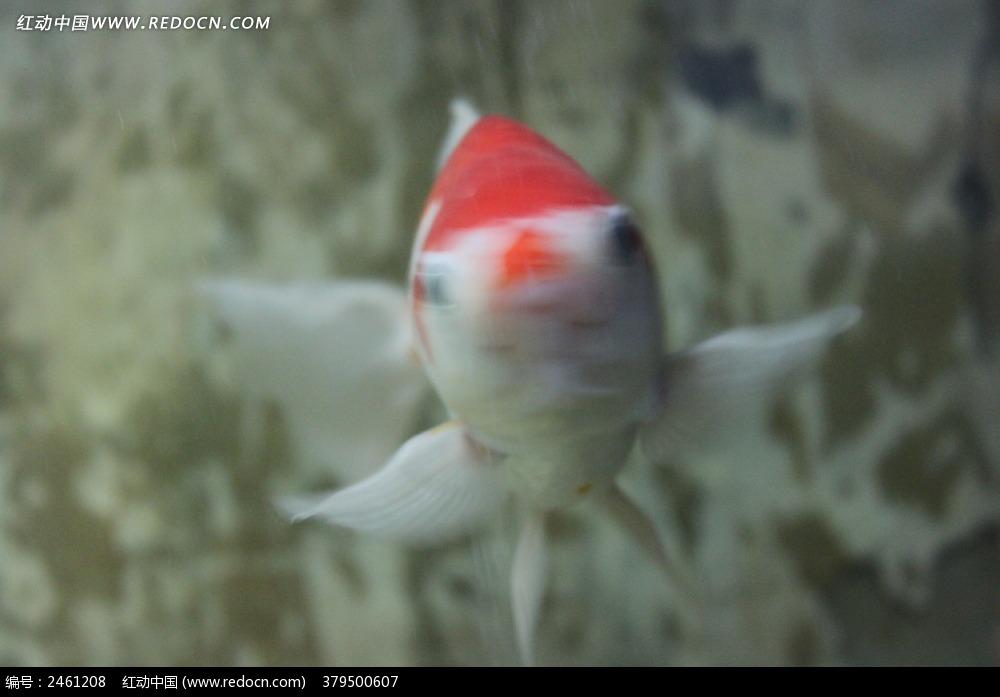 金鱼花编织视频图解