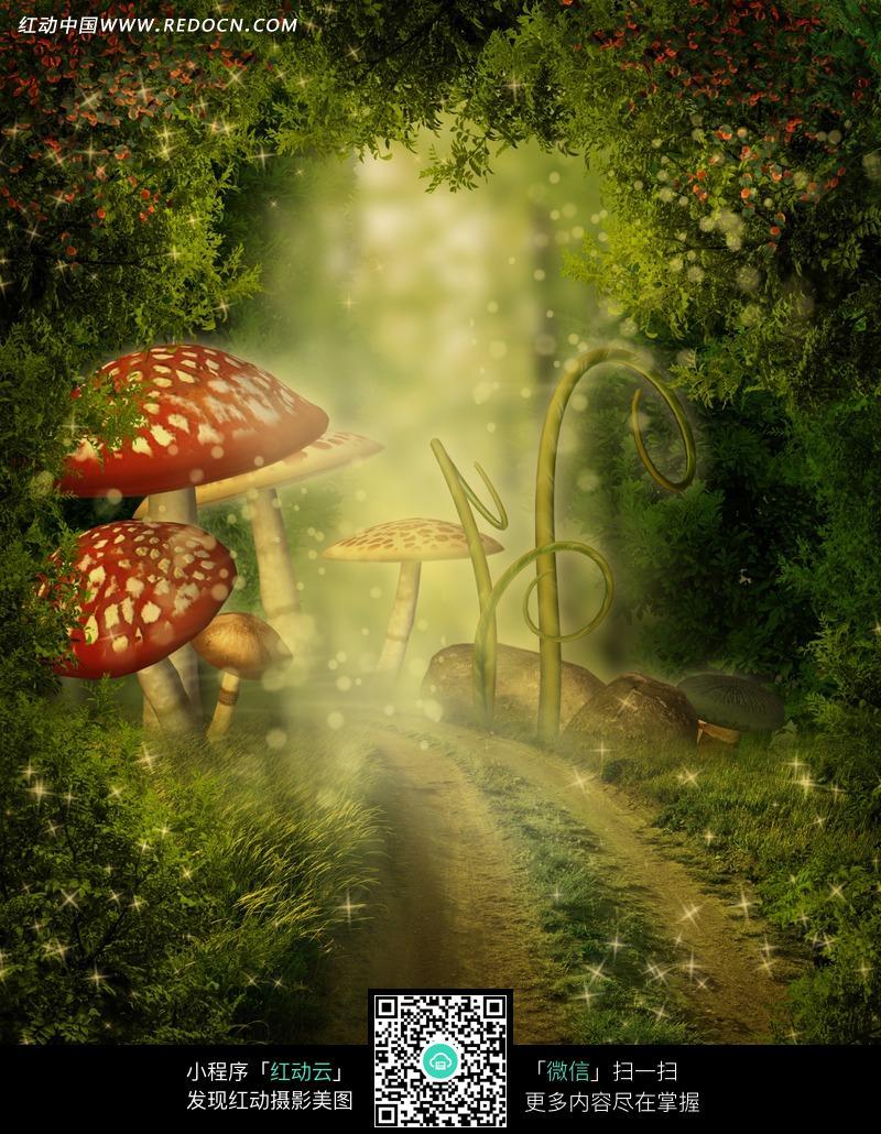 童话森林的小路摄影背景图片
