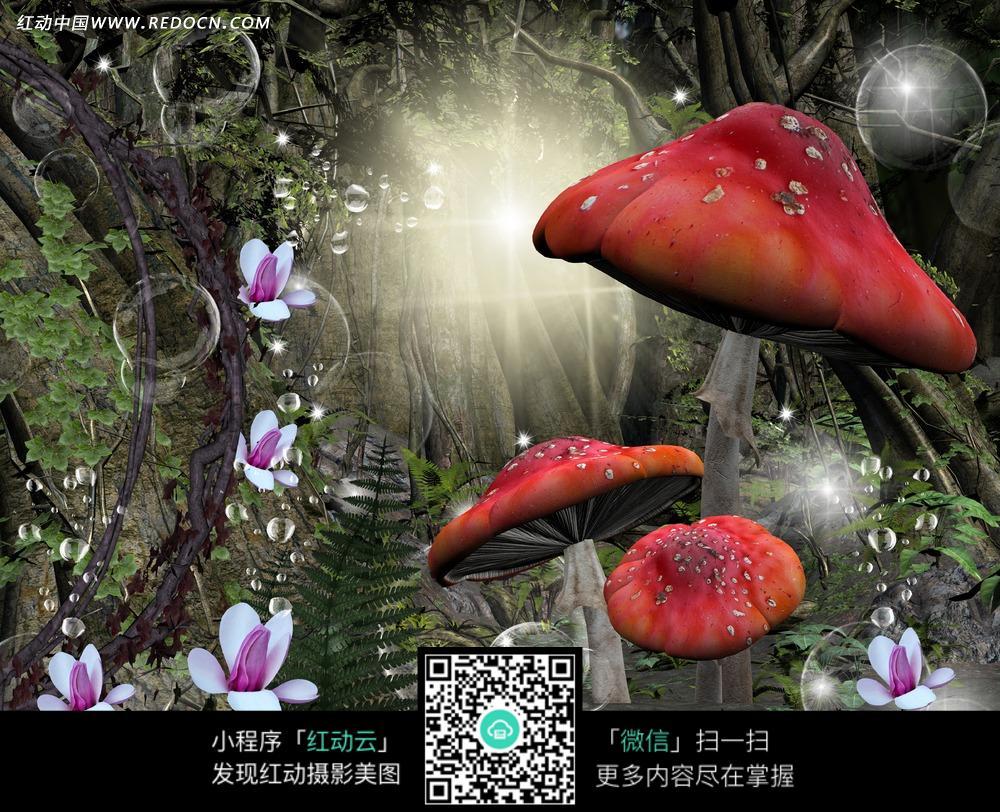 红色大蘑菇的森林摄影背景图片