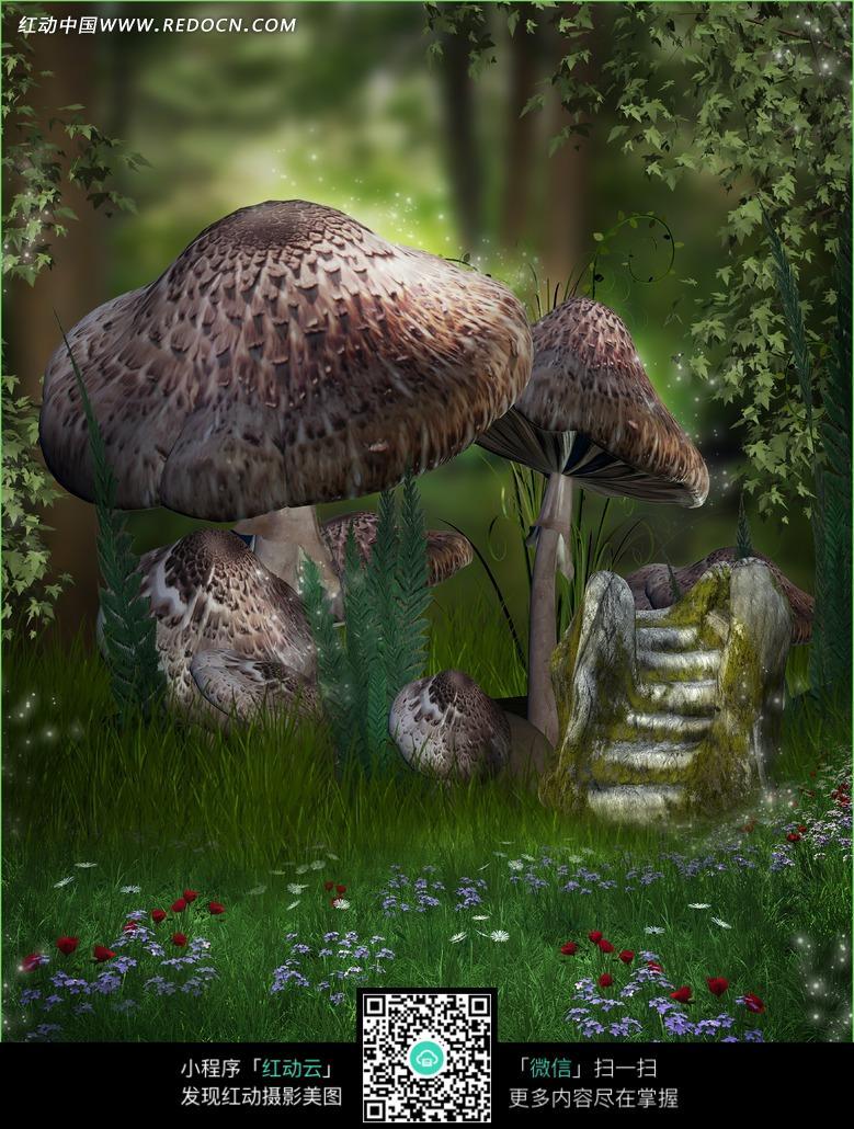 森林的巨型蘑菇摄影背景图片