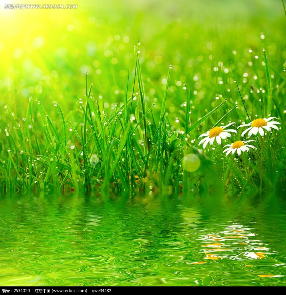 春天里水边草丛野花