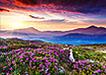 山顶美丽的花海