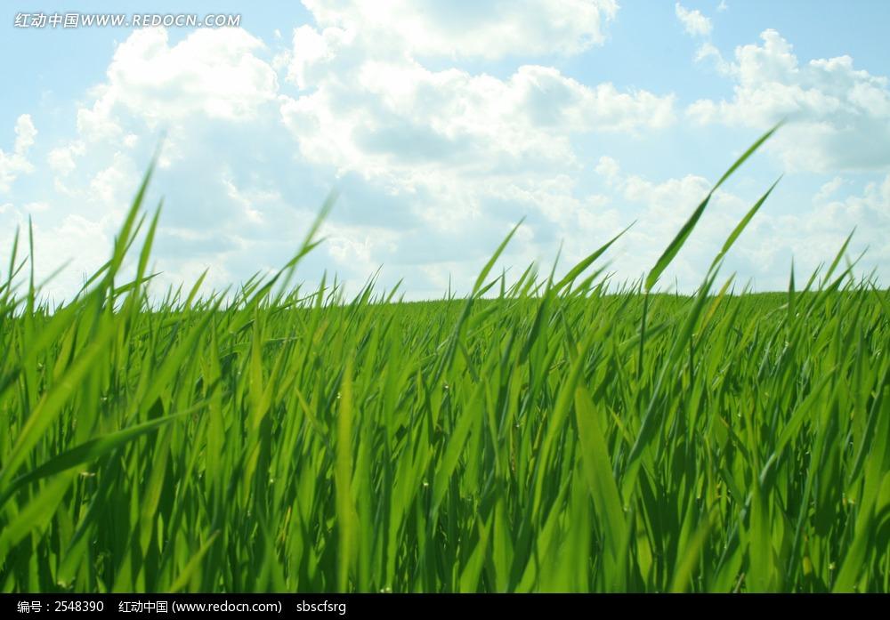 草丛的村落板书设计图