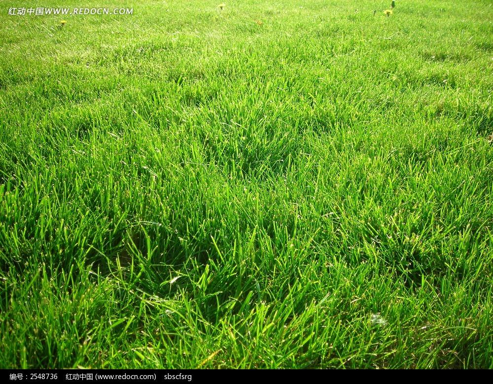 绿色草地图片 自然风景图片 高清图片