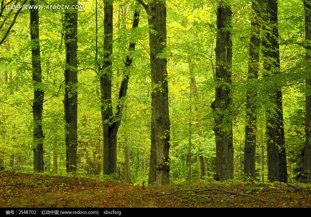 树林树木背景