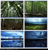 植物树林视频