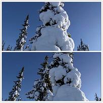 树木积雪画布视频