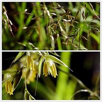 实拍植物花朵视频