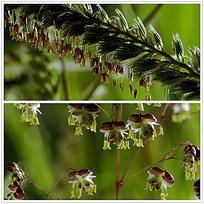 微距植物背景视频