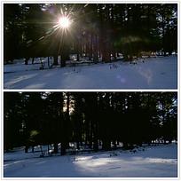 树林雪地背景视频