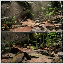 实拍植物生长视频