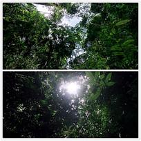 实拍树林树叶视频