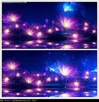 唯美灯效花卉夜景视频