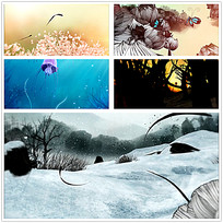 中国风花卉树叶背景视频