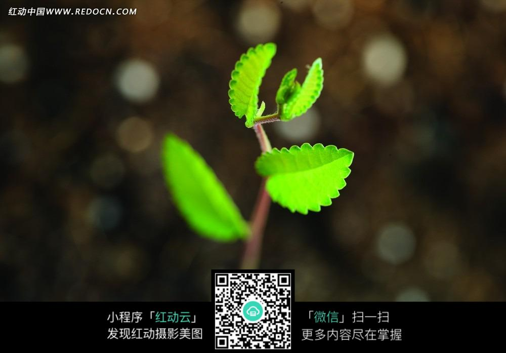 植物发芽图片