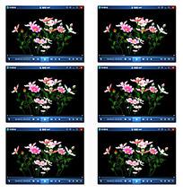 鲜花植物背景视频