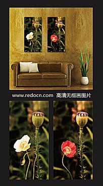 罂粟摄影装饰画