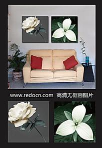 白玫瑰摄影装饰画