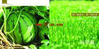 西瓜种子宣传册分层图