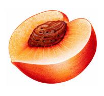 切开一半的苹果图片_水果蔬菜图片图片