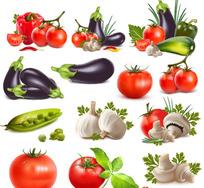 逼真的蔬菜矢量