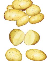 超写实土豆