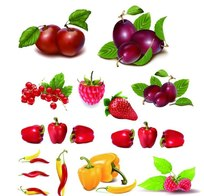超精美水果蔬菜集合