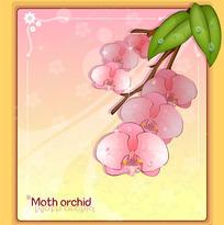 蝴蝶兰 扁竹