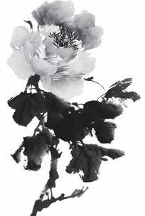 黑白花卉牡丹图片 黑白花卉牡丹设计素材 红动网