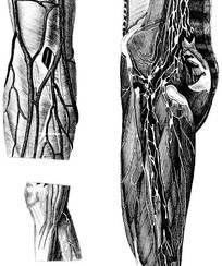 大腿神经分布图_大腿小腿比例-小腿与大腿的最佳比例|小腿长好还是大腿长好 ...