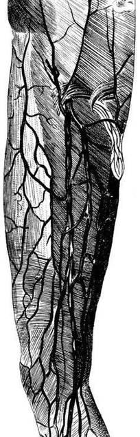 大腿神经分布图_人体神经分布图图片免费下载(编号113212)_红动网