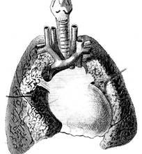 肺部结构图