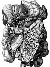 医学人体解剖图视频_人物内脏图片_人物内脏设计素材_红动网