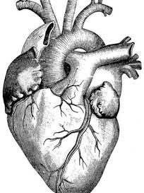 吃情敌心脏_2014心脏解剖简易图心脏解剖 解剖活体美女的心脏图片