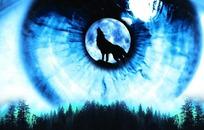 蓝眼睛图片