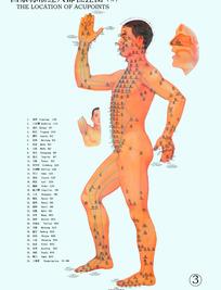 国家标准经穴部位挂图(男2)