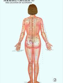 国家标准经穴部位挂图(女3)