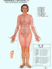 国家标准经穴部位挂图(女)