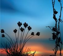 落日下的植物