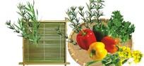 蔬菜(PSD导入CDR)
