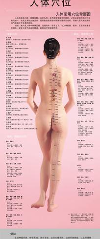 人体背面穴位图(全裸美女)