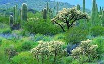 沙漠绿洲上的仙人掌植物