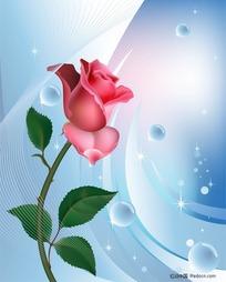 一朵漂亮玫瑰花