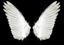 精美天使翅膀分层素材