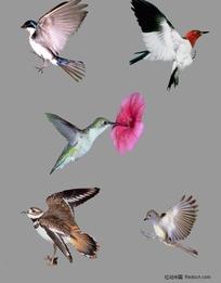 振翅飞翔的鸟分层素材