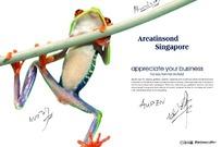 青蛙画册排版设计